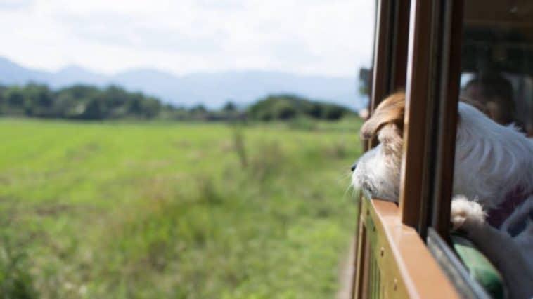 petit train promener chiens abandonnes