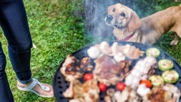 danger chien barbecue