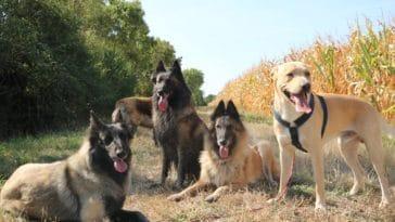 vacances chiens