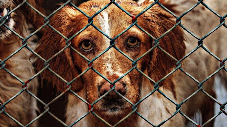 chien maltraité cage
