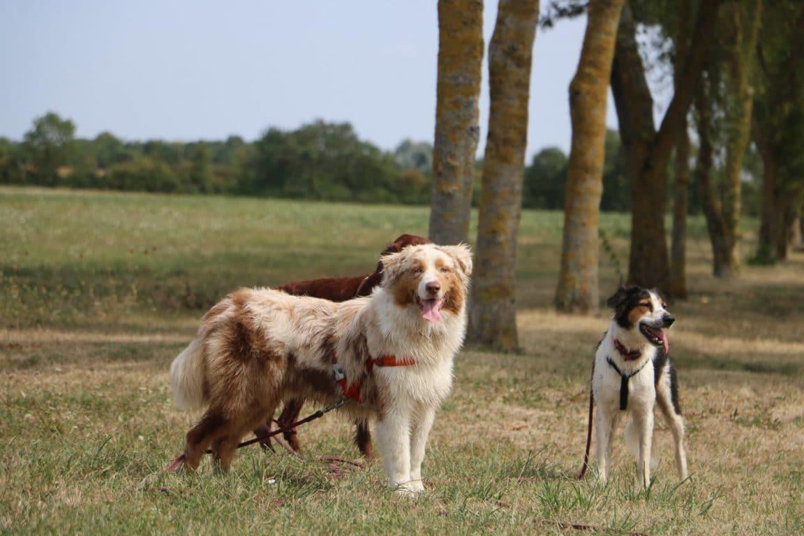 colonie de vacances chien