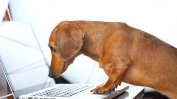 chien lire ordinateur