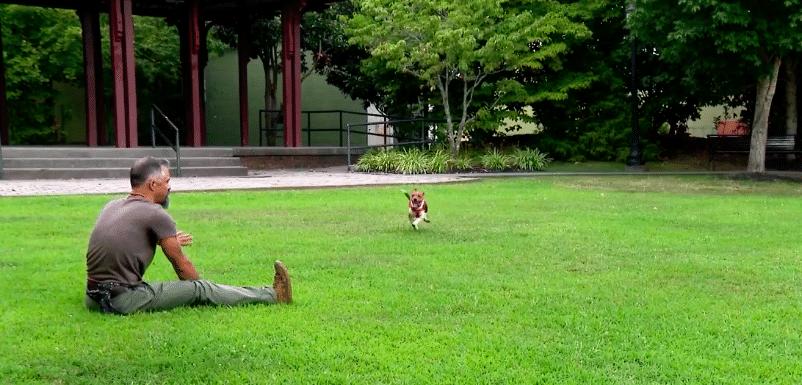 vétéran et chien