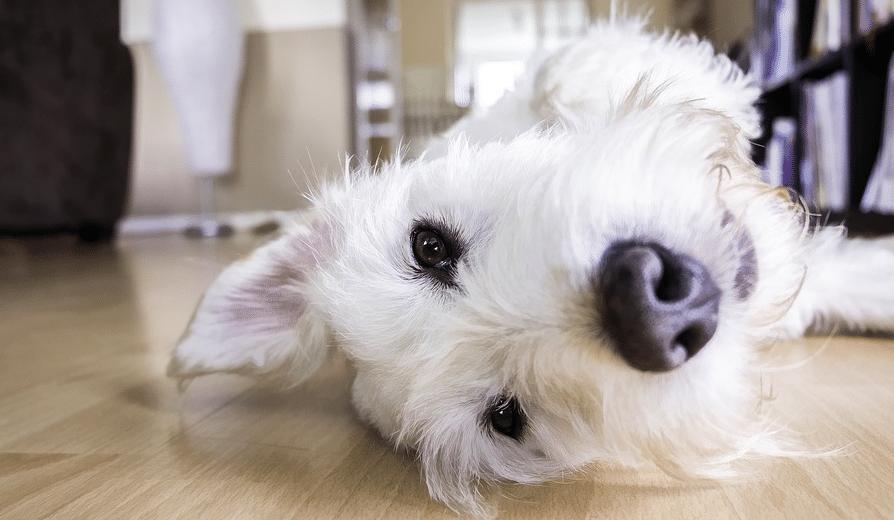 chien sol maison