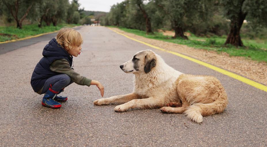enfant caresse chien