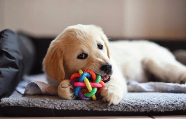 jouets d'occupation chien