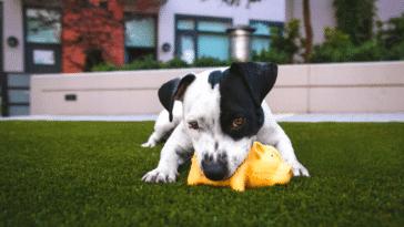 petit chien avec jouet
