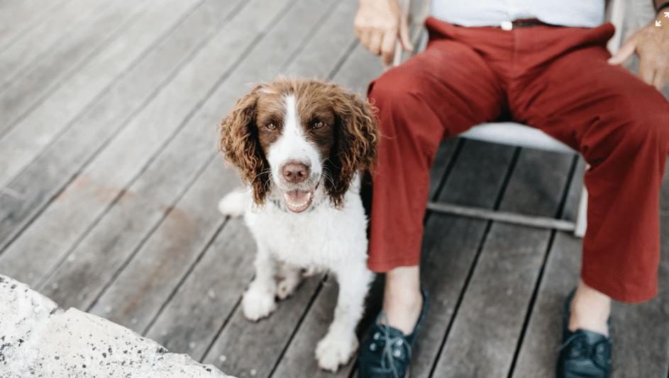 chien avec son humain