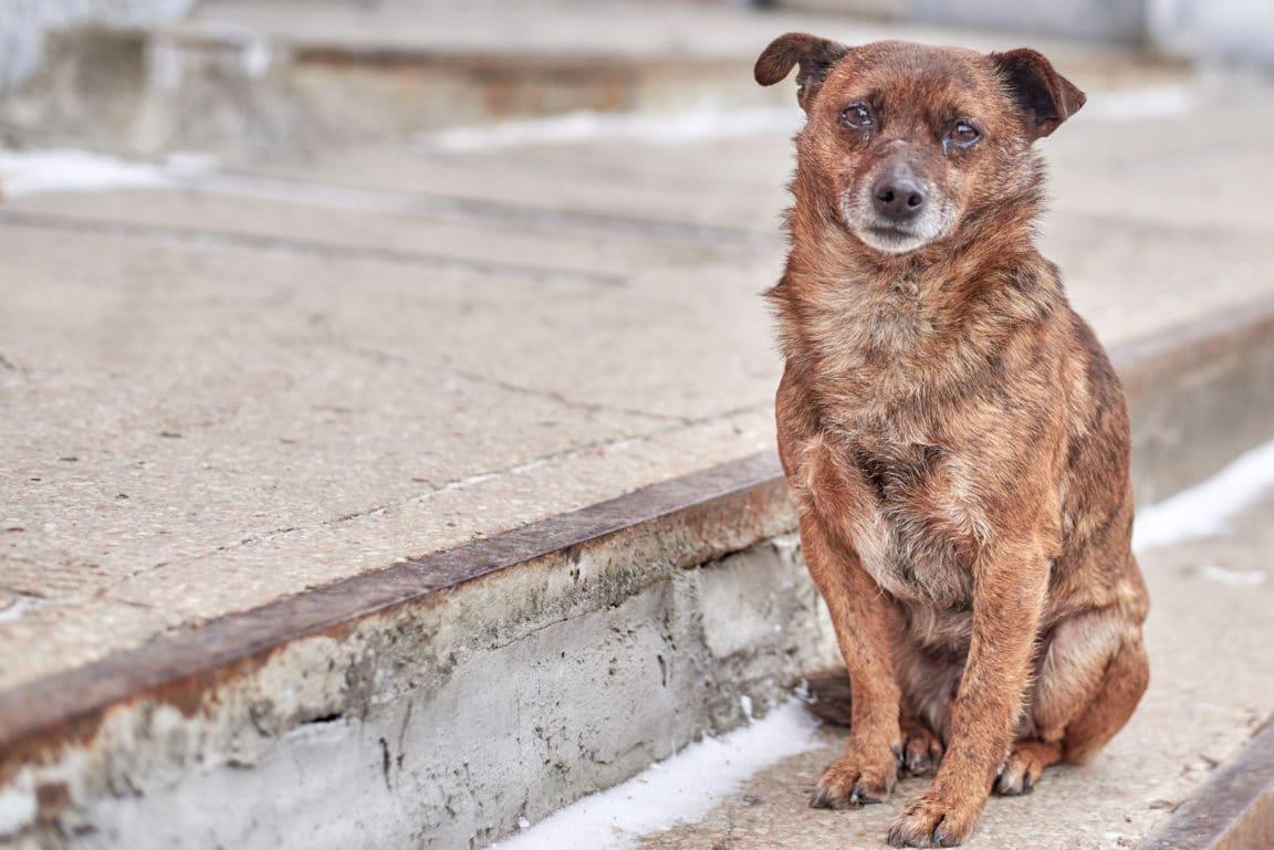 chien abandon rue