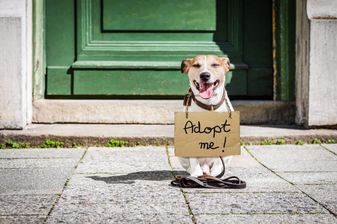 chien adoption perdu