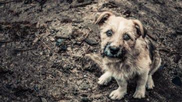 chien sale abandonné