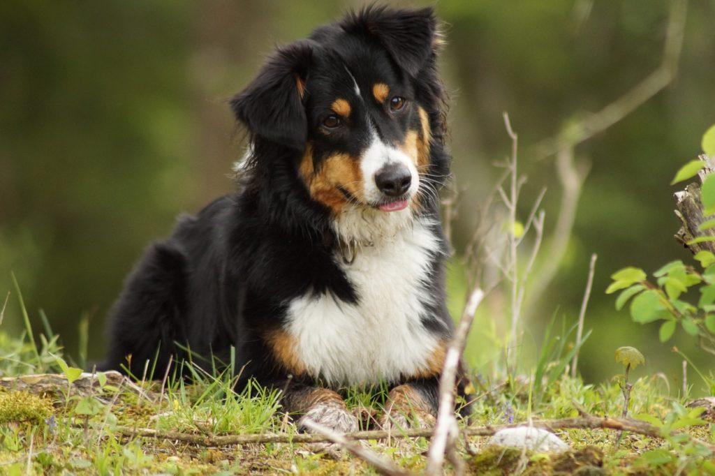 chien qui observe