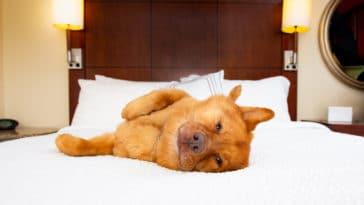 chien hôtel lit