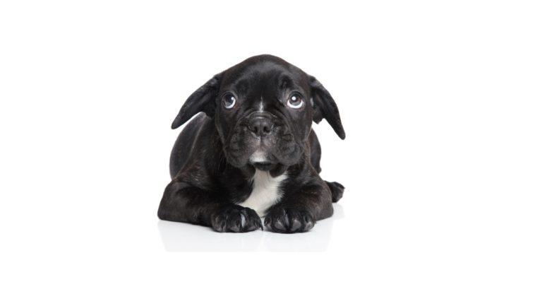 peur chien