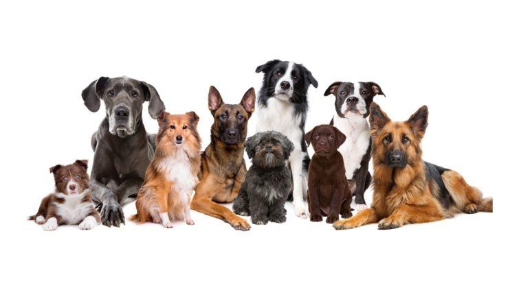 groupe de 9 chiens