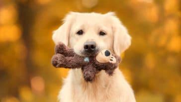 chien jouet peluche