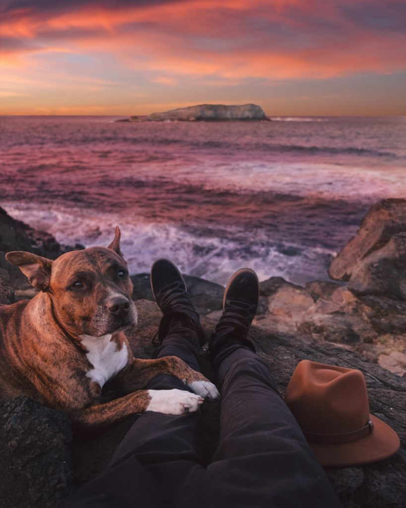 paysage chien