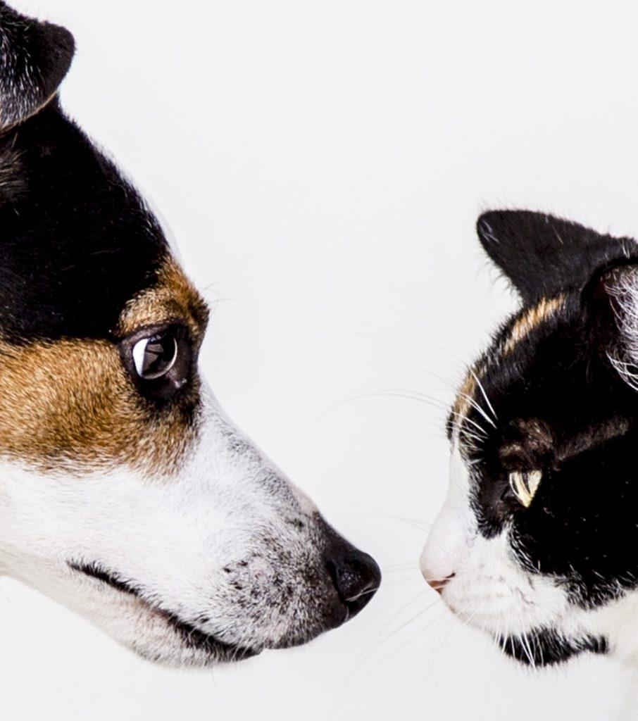 chien versus chat