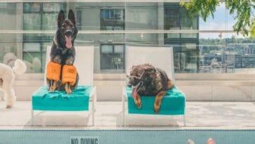 calendrier chiens policiers