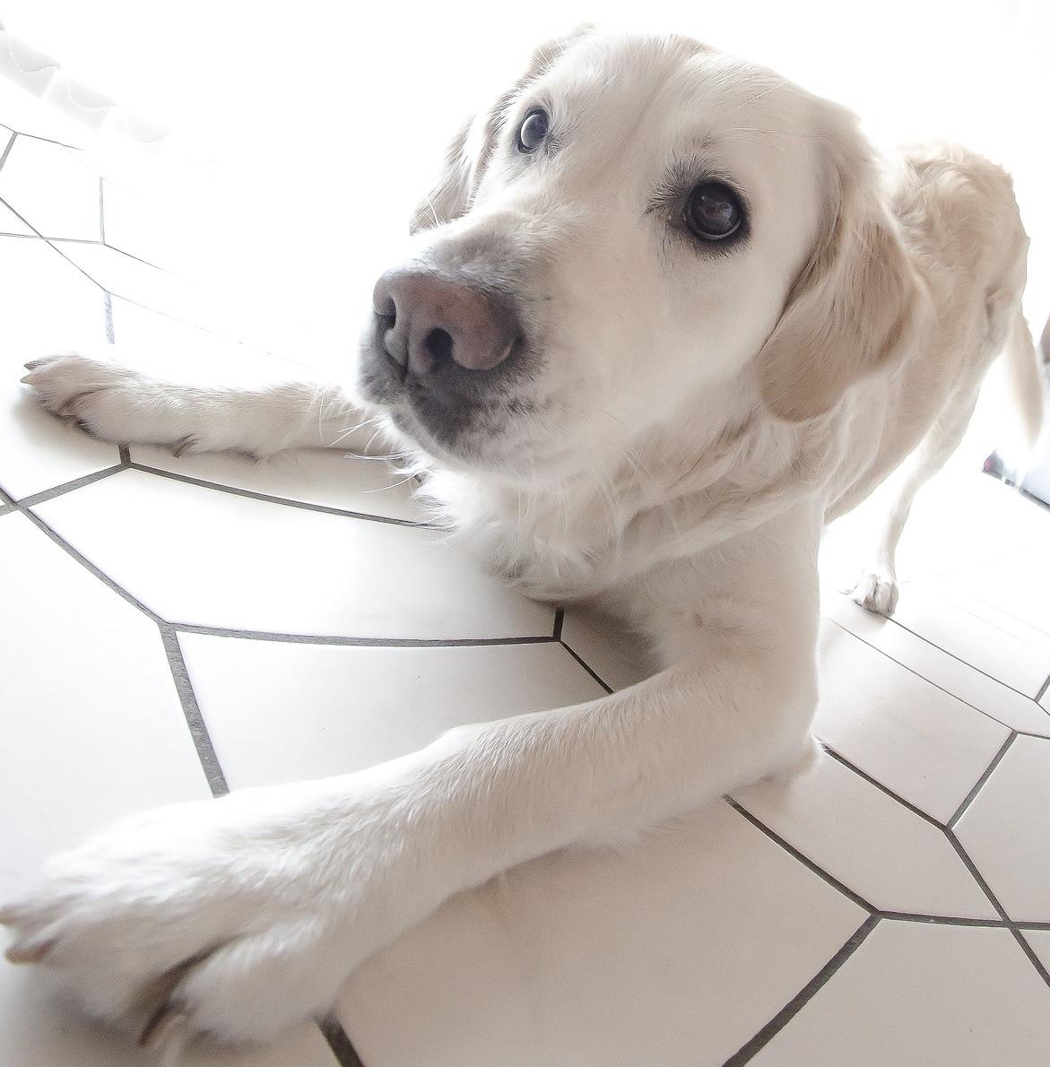 chien qui veut jouer