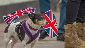 chien drapeau Angleterre