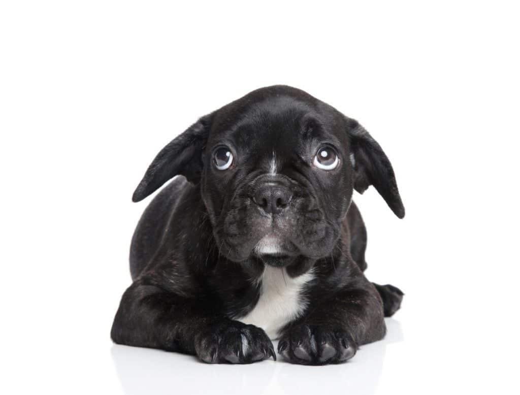 chien qui a peur