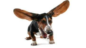 chien éternuement