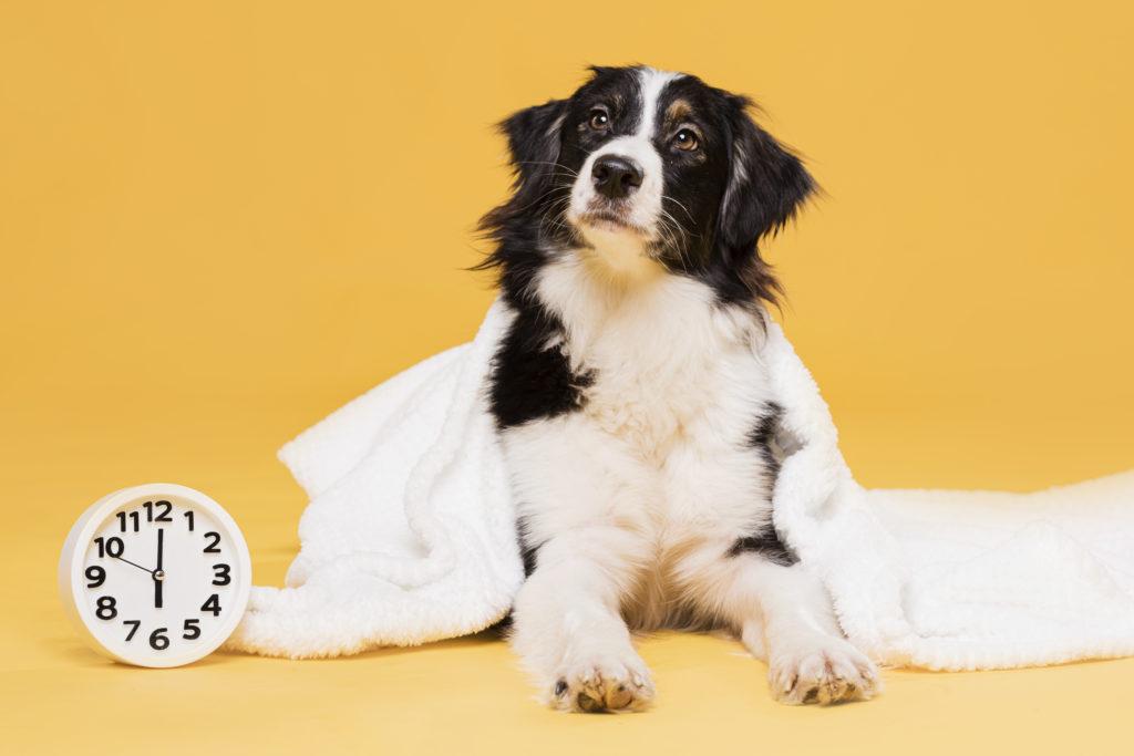 chien avec une horloge