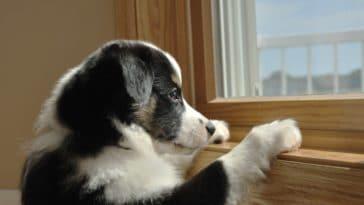 chien devant la fenêtre