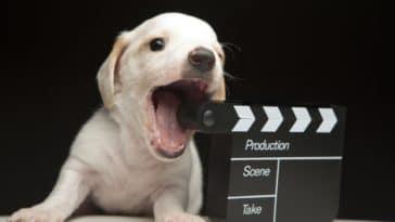 chien film