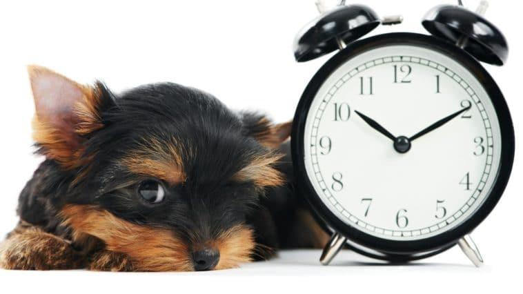 chien horloge