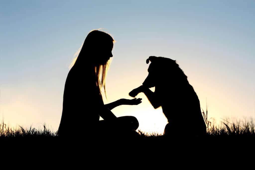 Silhouette chien et femme