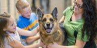 adoption de chien
