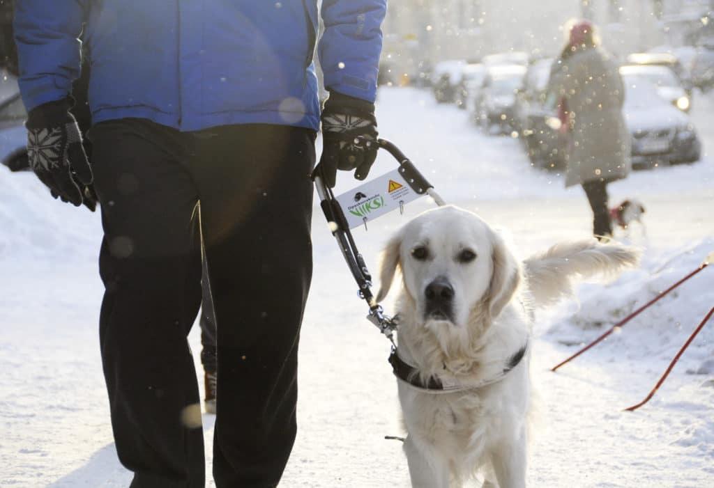 chiens d'utilité : guide d'aveugle