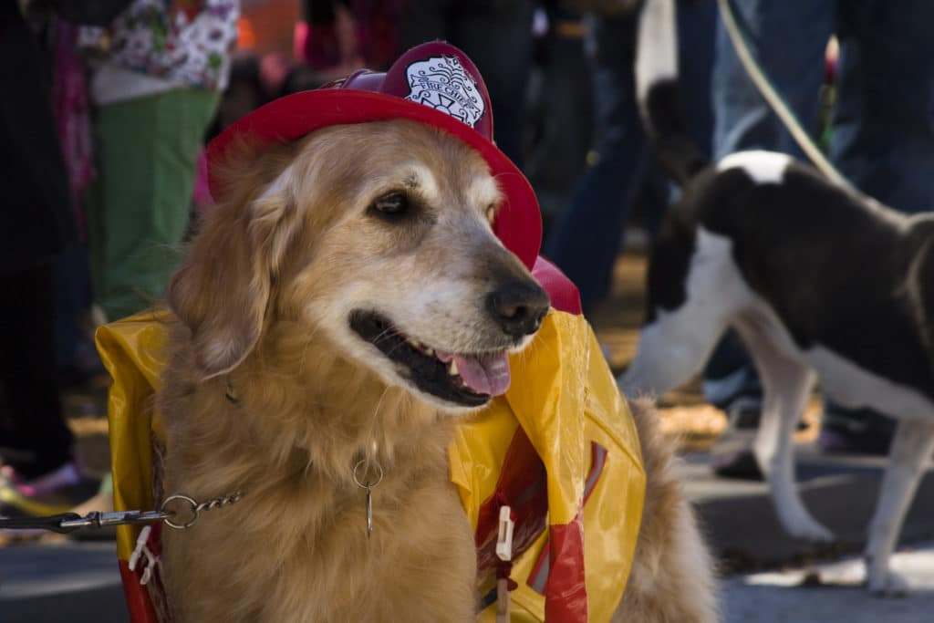 chiens d'utilité : pompier