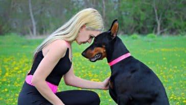 chien soutien maître