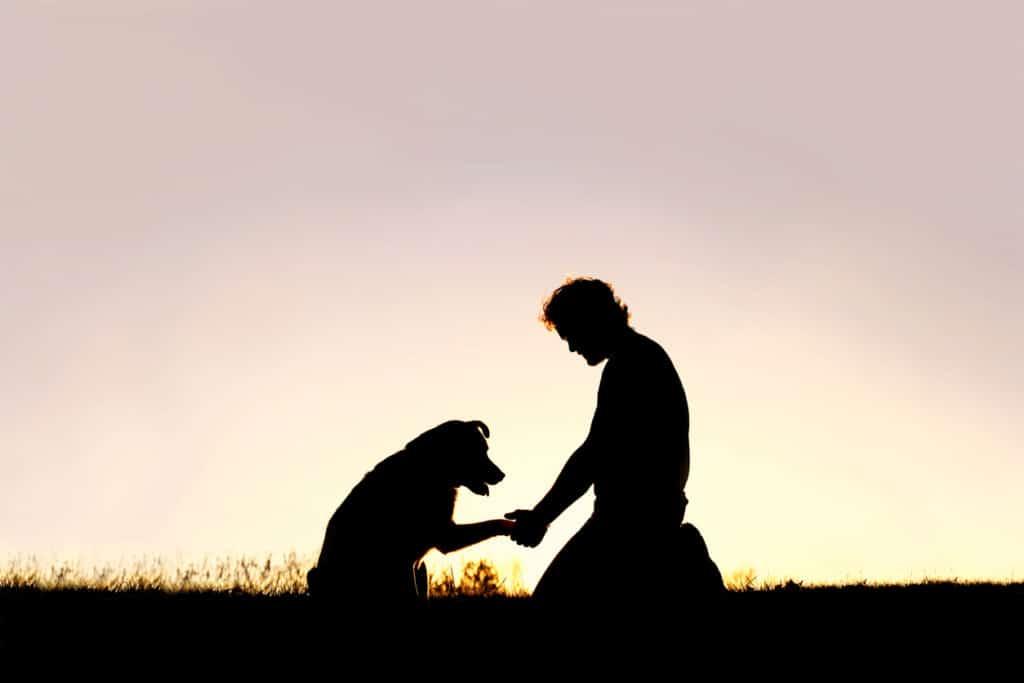 Silhouette homme chien main patte