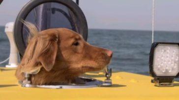 chien Arctique aventure