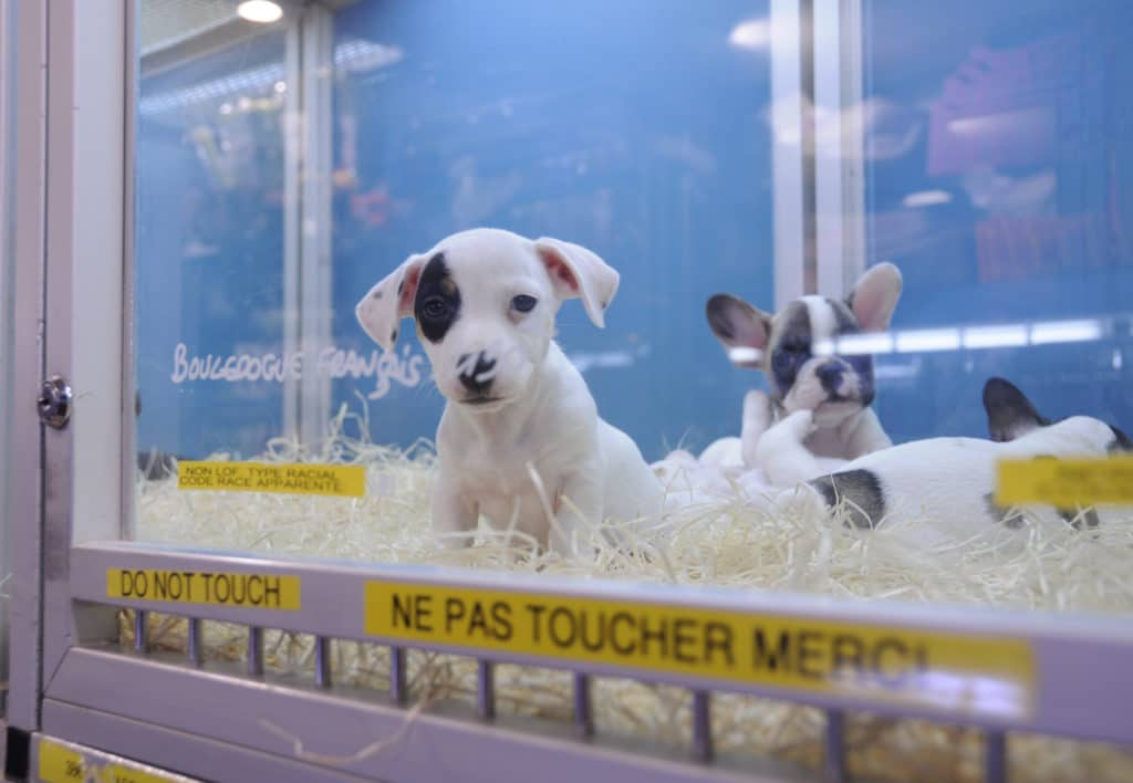 animalerie abandons d'animaux
