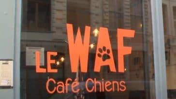 Waf café