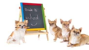 empathie éthique animale à l'école