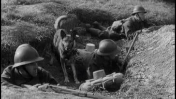 rendre hommage aux chiens guerre