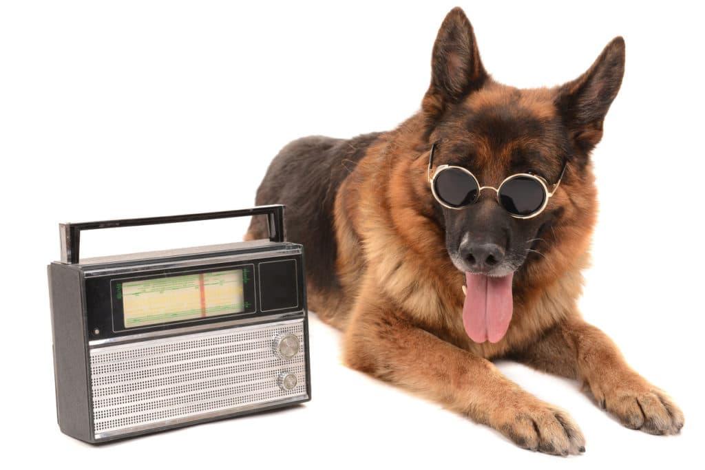 musique chiens