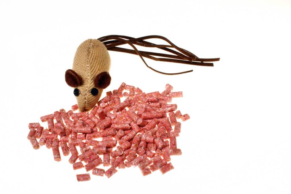 intoxication à la mort-aux-rats chez le chien