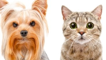 antiparasitaire chien chat