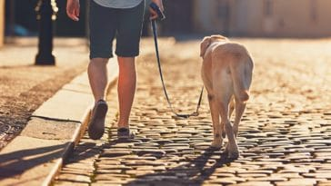 classement des villes chien