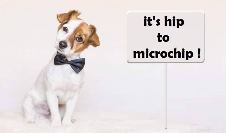 identification chien