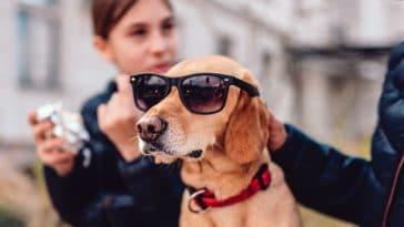 chiens crise d'ado