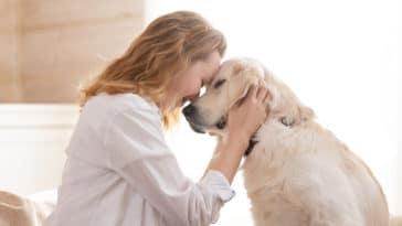 chien maitre amour bien-être