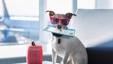 voyager étranger chien